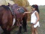 horse sex in the farm