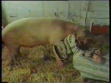 Woman raped by Pig