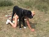 dog tries