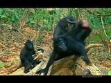 primates1 - 0'42''.avi