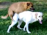 Dog fuck