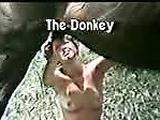 Horse handjob