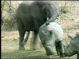 Elephant + Rhino