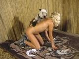 dog hvs-zoo-005-02 (1)